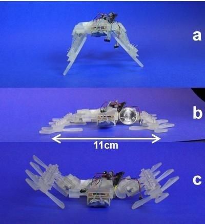 robot impreso en 3D medidas